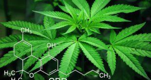 Migliori azioni cannabis 2021